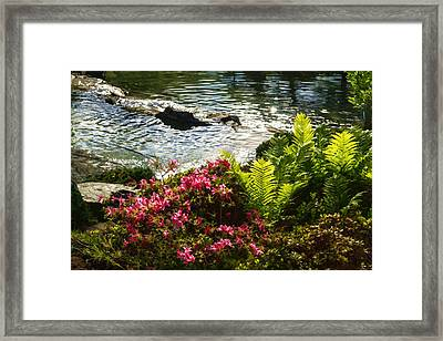Wild Rhododendrons And Ferns By The Silver River Framed Print