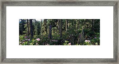 Wild Rhododendrons Mount Hood National Framed Print by Panoramic Images