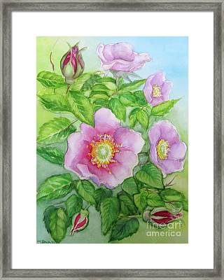 Wild Rose 3 Framed Print