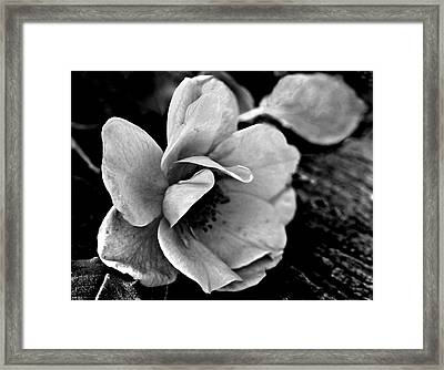 Wild Rose And Salvaged Barn Wood Framed Print