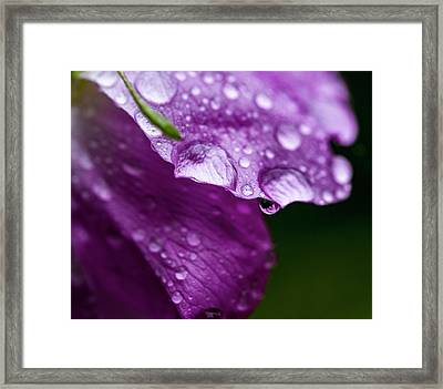 Framed Print featuring the photograph Wild Rose Droplet by Darcy Michaelchuk