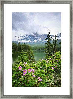 Wild Roses And Mountain Lake In Jasper National Park Framed Print