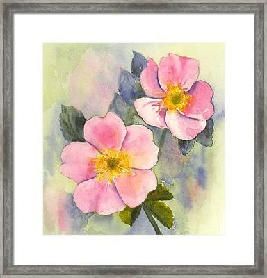 Wild Roses - Glacier Framed Print