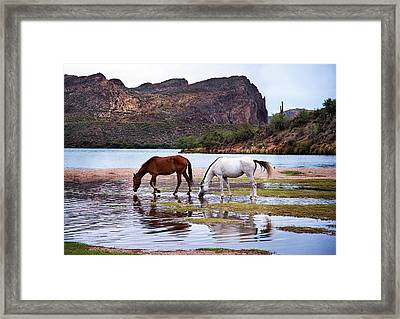 Framed Print featuring the photograph Wild Salt River Horses At Saguaro Lake Arizona by Dave Dilli