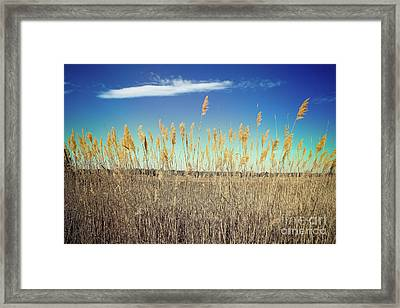 Wild Sea Oats Framed Print by Colleen Kammerer