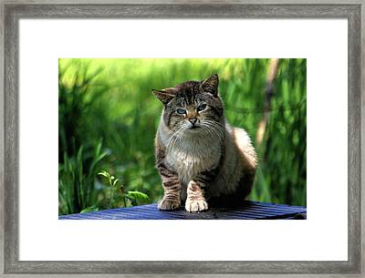 Framed Print featuring the photograph Wild Siamese by Chriss Pagani