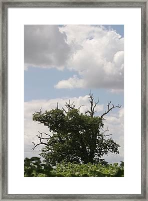 Wild Sky Framed Print by Dagmar Batyahav