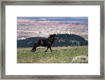 Wild Spirit Horse Framed Print by Wildlife Fine Art