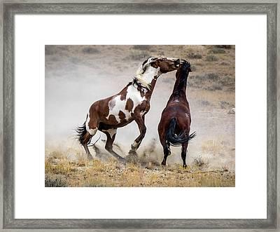 Wild Stallion Battle - Picasso And Dragon Framed Print