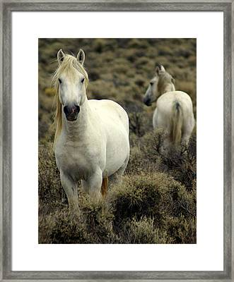 Wild Stallion Framed Print by Marty Koch