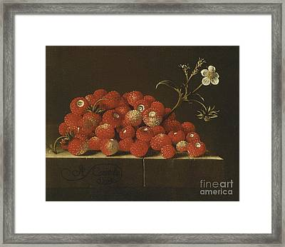 Wild Strawberries On A Ledge Framed Print
