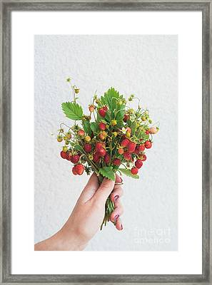 Wild Strawberries Framed Print by Viktor Pravdica