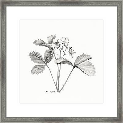 Wild Strawberry Drawing Framed Print
