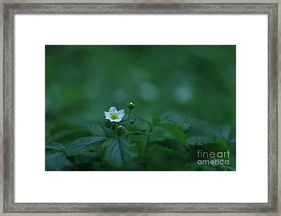Wild Strawberry Flower Framed Print
