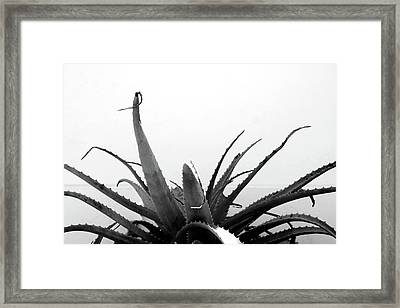 Wild Succulent-  By Linda Woods Framed Print