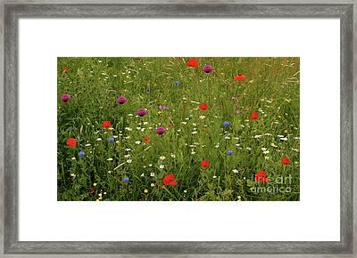 Wild Summer Meadow Framed Print