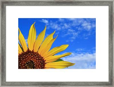 Wild Sunflower Framed Print