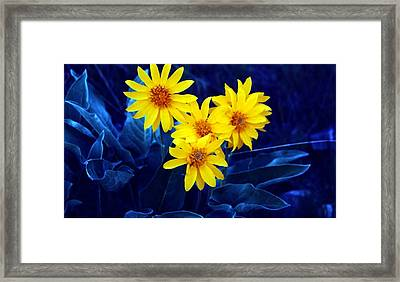 Wild Sunflowers Framed Print by Tiffany Vest