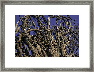 Wild Tangled Tree Roots Framed Print