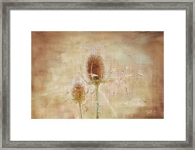 Wild Teasel Framed Print