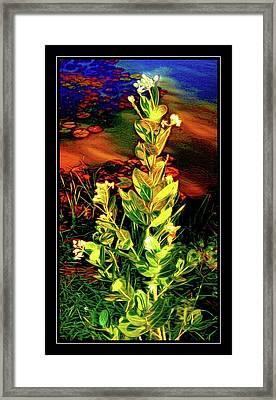 Wild Thai Lake Jasminum - Photo Painting Framed Print by Ian Gledhill