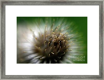 Wild Thing Framed Print by Lois Bryan
