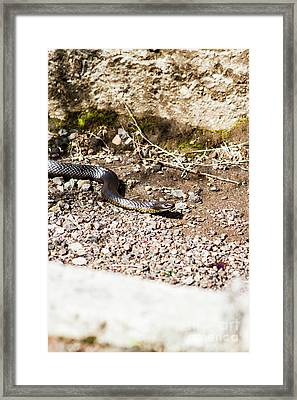 Wild Tiger Snake Framed Print by Jorgo Photography - Wall Art Gallery