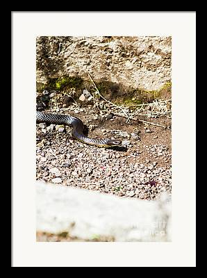Venom Framed Prints