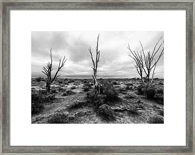 Framed Print featuring the photograph Wild Trinity by Julian Cook