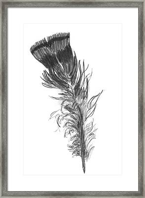 Wild Turkey Feather Framed Print by Kevin Callahan