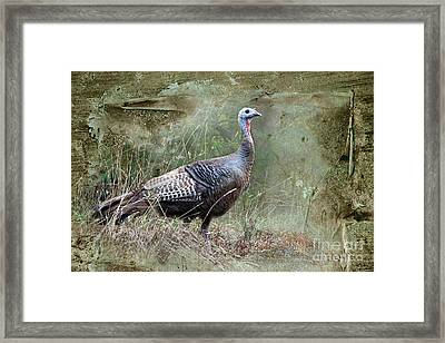 Framed Print featuring the photograph Wild Turkey by Jan Piller