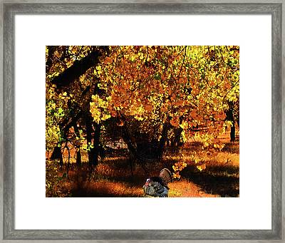Wild Turkey Framed Print by Terril Heilman