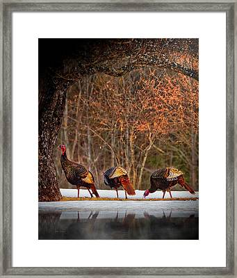 Wild Turkey Winter Framed Print
