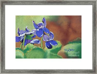Wild Violets Framed Print by Tracy L Teeter