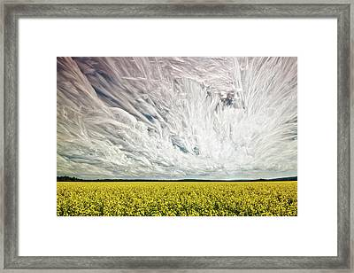 Wild Winds Framed Print