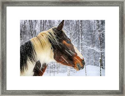 Wild Winter Storm Framed Print