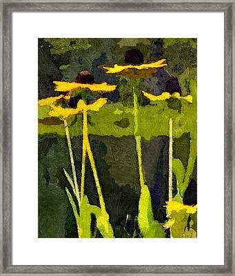 Wild Yellow Coneflowers 12 Framed Print