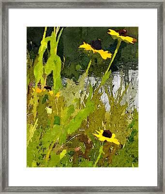 Wild Yellow Coneflowers 29 Framed Print