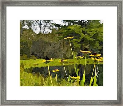 Wild Yellow Coneflowers 31 Framed Print