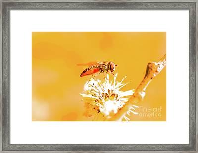 Wild Yellow Framed Print