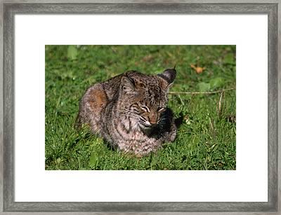 Wildcat Beach Framed Print