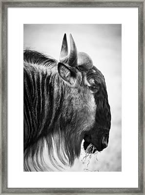 Wildebeest Framed Print by Adam Romanowicz