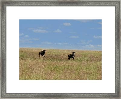 Wildebeest Migration Masai Mara Kenya Framed Print by Joseph G Holland