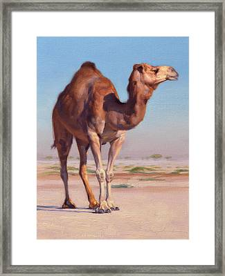 Wilderness Camel Framed Print by Ben Hubbard