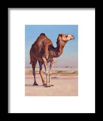 Camel Framed Prints