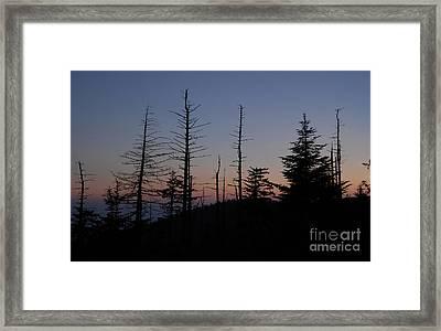 Wilderness Framed Print by David Lee Thompson