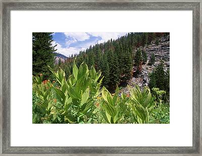Wilderness Expedition Framed Print by Soli Deo Gloria Wilderness And Wildlife Photography