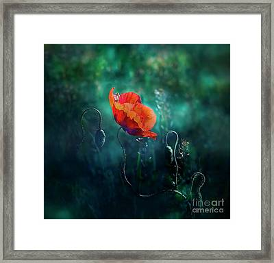 Wildest Dreams Framed Print by Agnieszka Mlicka