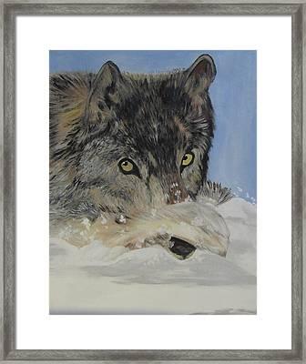 Wildeyes In The Snow Framed Print by Aleta Parks