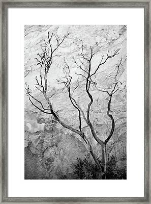Wildfire Manzanita Framed Print